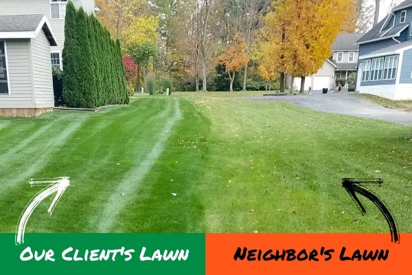 A split image that shows a Premier Lawn Services customer lawn that is healthy and green thanks to lawn treatments along side the neighbors lawn that did not receive lawn treatments which is brown and dry.