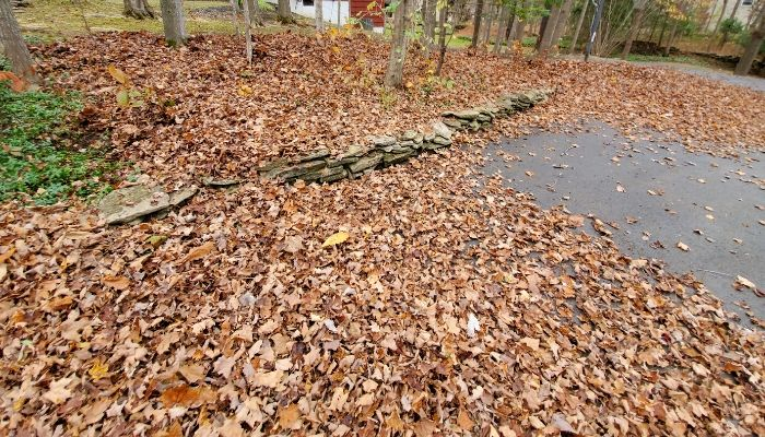 A customers backyard covered in leaves ready to be professional cleared in the Syracuse area.