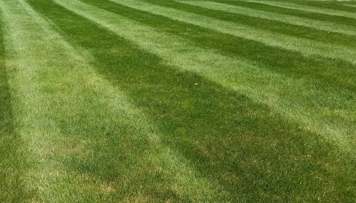 A lush healthy green lawn.