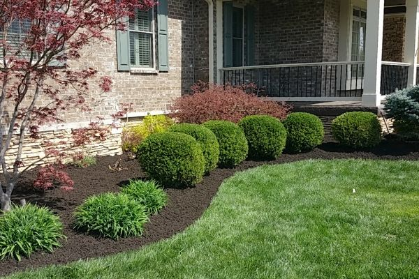 A flower bed that lines a home with newly pruned shrubs.